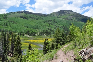 A view of the meadow from the trail
