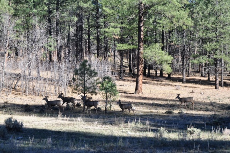 The group of deer we saw as we headed home. We saw one other buck on the way out.